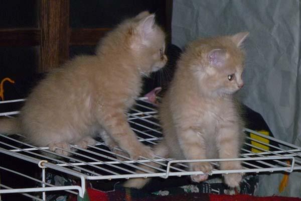 140505cats2.jpg
